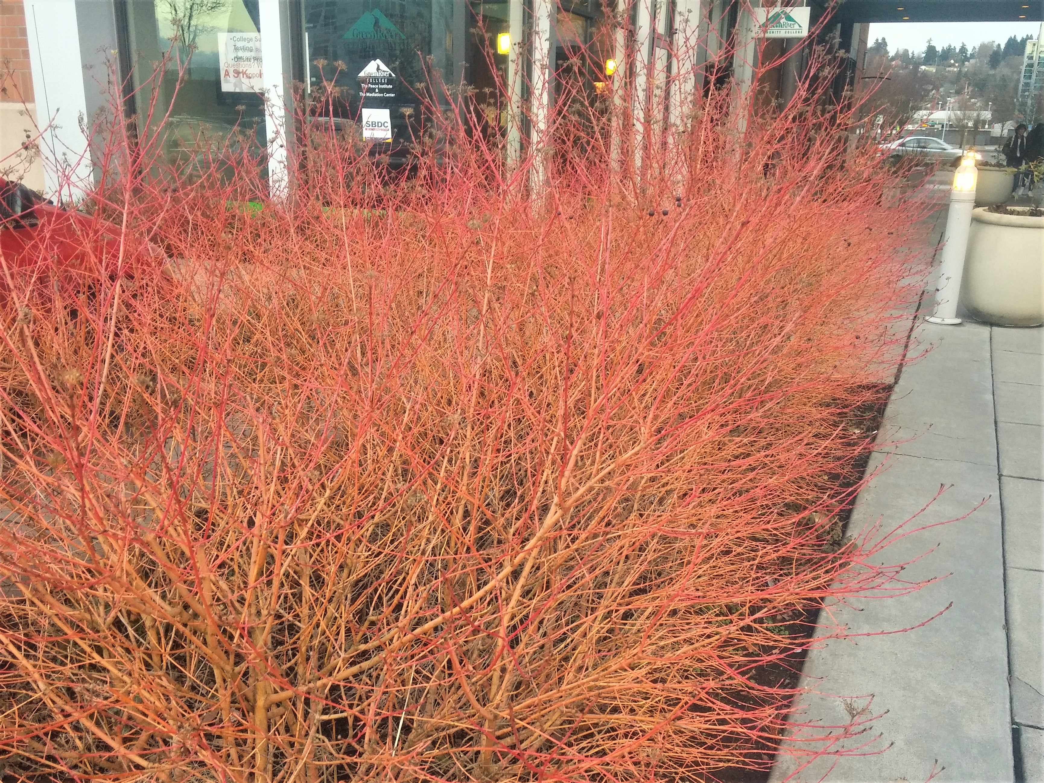 Exciting Plants for the Dead of Winter