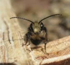 MASON BEES, AND LEAFCUTTER BEES, AND HONEY BEES, OH MY!