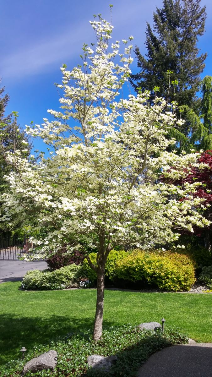 Pruning Your Special Ornamental Trees