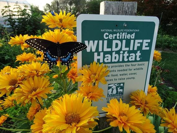 Supporting Wildlife in Your Backyard with the Garden for Wildlife® Program