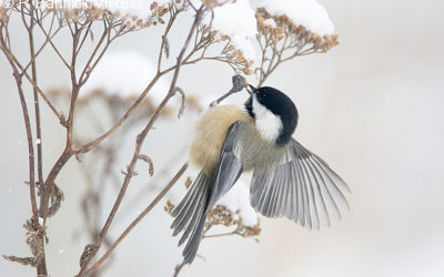 Hold Your Clippers! Here's How You Can Help Out The Birds