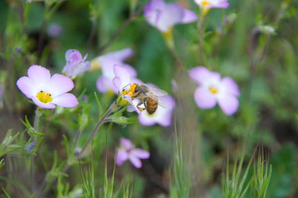 All the Buzz About Native Bees: A Local Org Has Learning Resources and Supplies